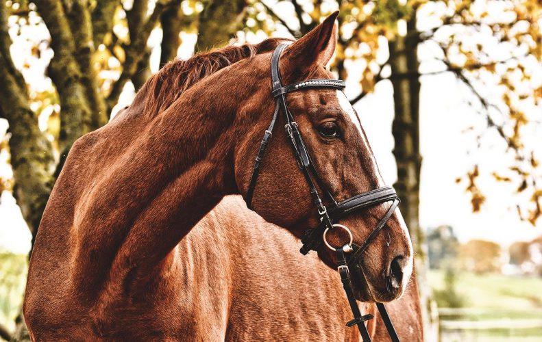 horse, brown, animal