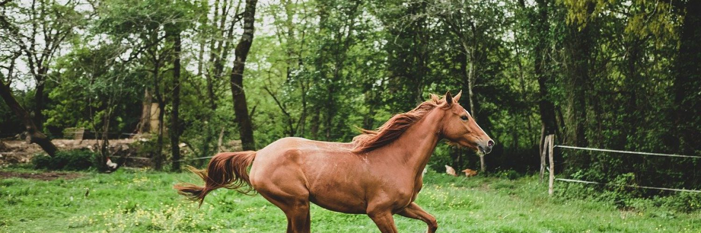 mare, horse, animal